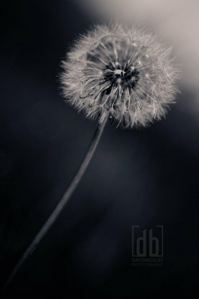 Untitled by David Bickley Photography