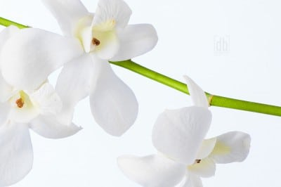 Orchids by David Bickley Photography
