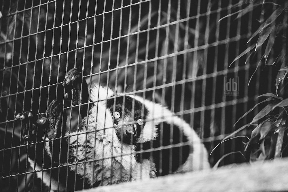 Imprisoned by David Bickley Photography